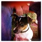 Kunstrendezvous Prisma - Hund